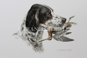 tableau animaux chasse chiens animaux setter : Setter tricolore